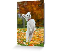 Pup standing up Greeting Card
