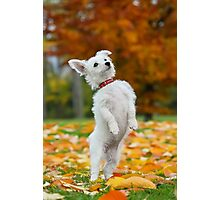 Pup standing up Photographic Print