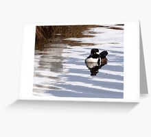 After the Storm-Hooded Merganser Greeting Card