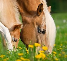 Common dinner, foal with mom by Katho Menden