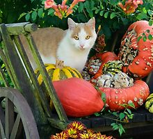 Cat and pumkins by Katho Menden