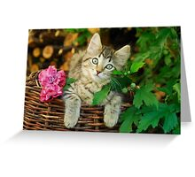 Cutie young kitten on a wicker basket  Greeting Card