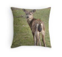 Glaring deer 1 Throw Pillow