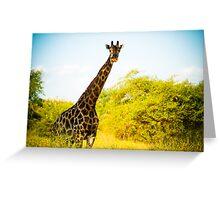 Giraffe at Sucoma Nyala Park, Malawi Greeting Card