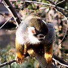 GOLDEN MONKEY by angelc1