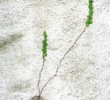 Growth by Dentanarts