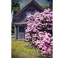 Purple Rhody House (Orleans Cape Cod) Photographic Print