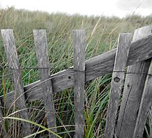 Cape Cod Snow Fence by Christopher Seufert