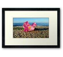 Cape Cod Rose Hip Blossom on the Beach (Peaked Hill Bars, Provincetown) Framed Print