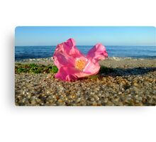 Cape Cod Rose Hip Blossom on the Beach (Peaked Hill Bars, Provincetown) Canvas Print