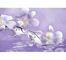 orchid spray Photographic Print
