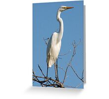 Great Egret, Moremi Game Reserve, Botswana, Africa Greeting Card