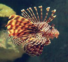 Fish at Melbourne Aquarium, Victoria by groophics