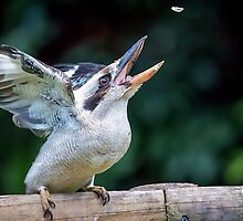 Kooka Catch.... by Tracie Louise