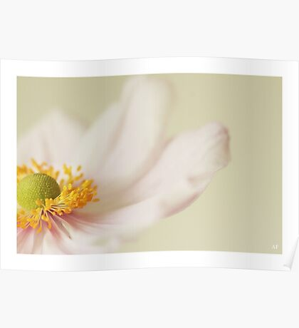 Japanese Anemone  Poster