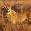 Sniffing The Air by Leon Rossouw