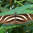 Butterfly 1 by karenuk1969