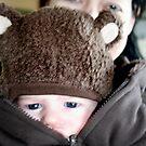Baby Bear by Alison Edge