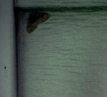 Moth by Kale E.