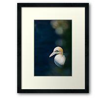 Gannet Framed Print