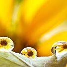 ...three raindrops kiss'd... by Geoffrey Dunn