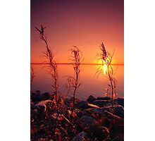 Sunset with plants in foreground Photographic Print