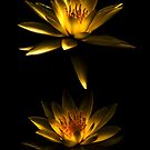 Water Lilies by Claire  Farley