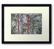 28.2.2015: Pine Trees and Sleet I Framed Print
