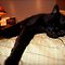 Black cats sleeping