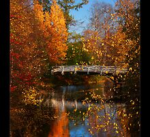 Yellow trees in autumn near a bridge, Finland by Sandra Kemppainen