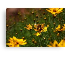 Bumble-Baby Canvas Print