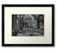 Old Giants for Mary Beth Framed Print