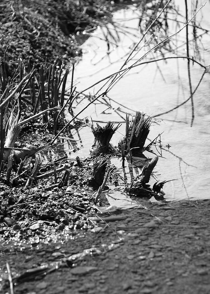 Muddy Waters by JenB