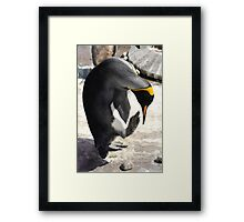 Pointing Penguin Framed Print
