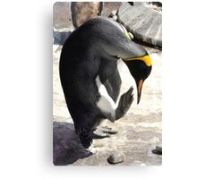 Pointing Penguin Canvas Print
