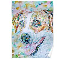 JACK RUSSELL TERRIER - watercolor portrait.1 Poster