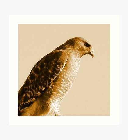 Portrait of a Red-Shouldered Hawk  #1 Art Print