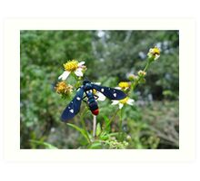 Polka-dotted Wasp Moth Art Print