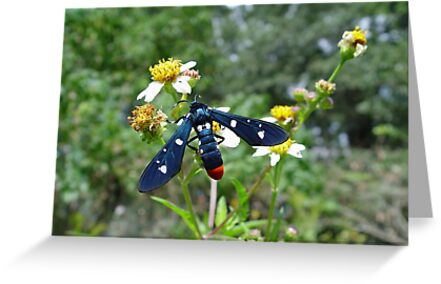 Polka-dotted Wasp Moth by May Lattanzio