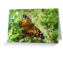 American Lady (Dorsal) Greeting Card