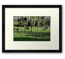 Herd of Holstein Cows Framed Print