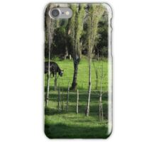 Herd of Holstein Cows iPhone Case/Skin