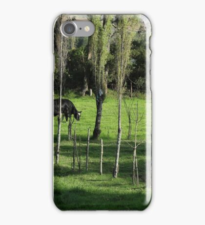 Herd of Holstein Cows iPhone Case/Skin