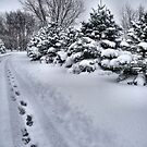Welcome Winter by Sheri Nye