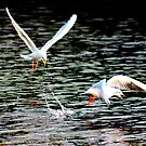 gulls at play by photogenic