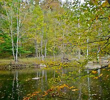 Unami Creek Dressed For Autumn by MotherNature2
