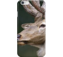 Stag iPhone Case/Skin
