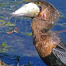Anhinga Lunch by sailorsedge
