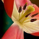 Pink Carousal  by Pamela Hubbard