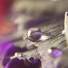 Water Drop on Flower by Megan Stone